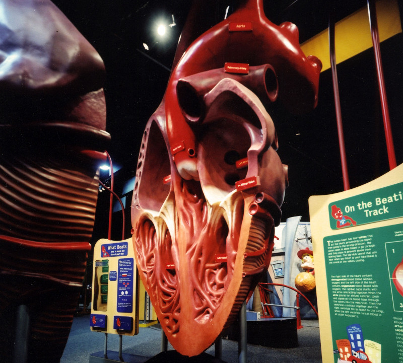 Discovery Place - Heart Exhibit